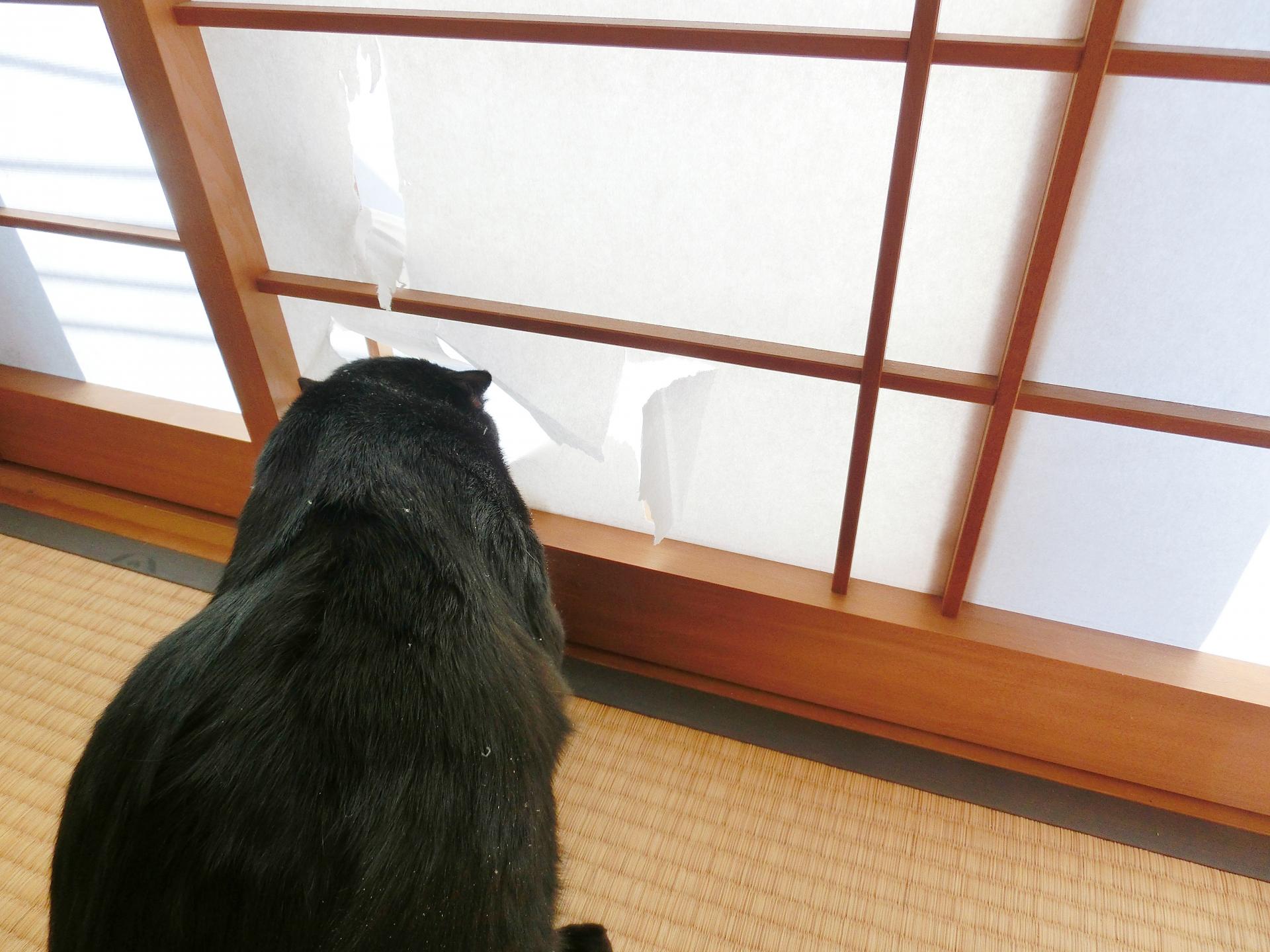 ふすま・障子・網戸・畳の張替、ガラス修理なら